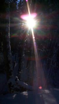 Tiefstehende Wintersonne zwischen Bäumen.